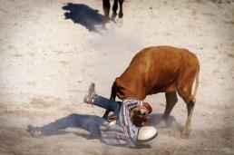 Vaquero compite en el derribo de reses a mano en el Torneo Internacional de Rodeo y Coleo, durante la Feria Internacional Agroindustrial Alimentaria (FIAGROP) de Rancho Boyeros el viernes 21 de marzo de 2014 en La Habana, Cuba. FOTO de Calixto N. Llanes/Juventud Rebelde (CUBA)